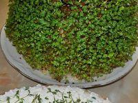 Kanapki z twarożkiem i rzeżuchą