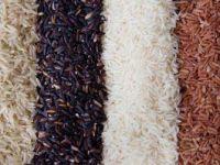 Ryż - wszystko o ryżu