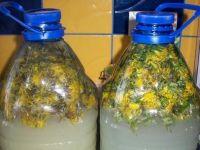 Wspaniałe wino z kwiatków mleczu