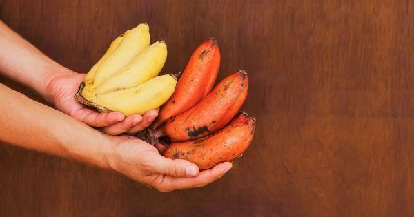 Ile schudnę jedząc przez 9 dni tylko owoce i warzywa? - sunela.eu -