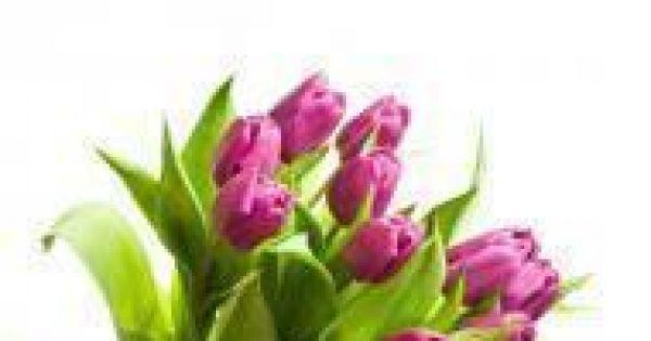 Jakie Kwiaty Wreczamy Na Imieniny Gotujmy Pl