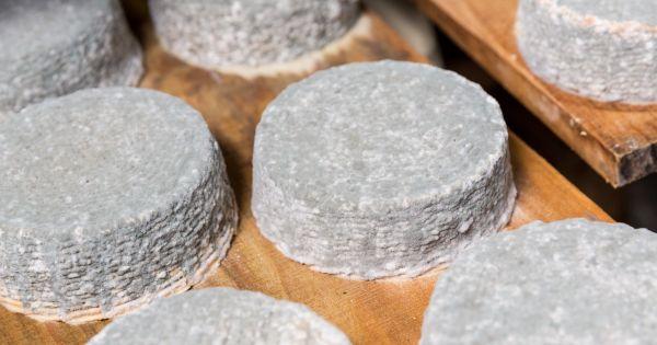 Produkcja sera pleśniowego