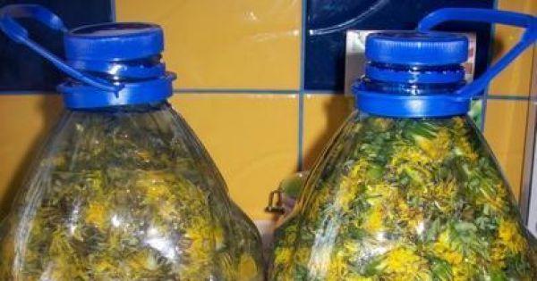 Wspaniałe wino z kwiatków mleczu - kamazka439
