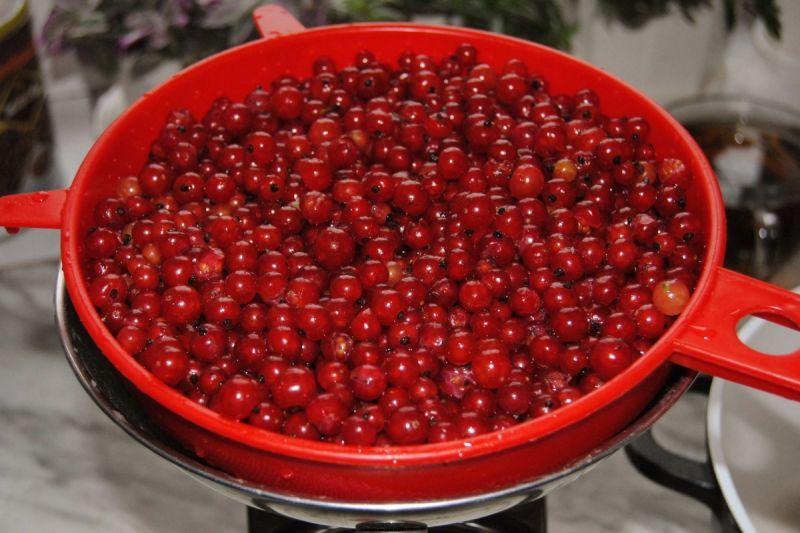 Galaretka z czerwonych porzeczek