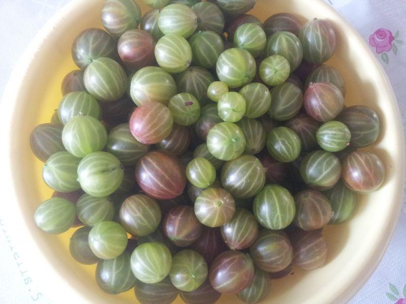 Kompot z agrestu truskawek i czereśni w słoikach.