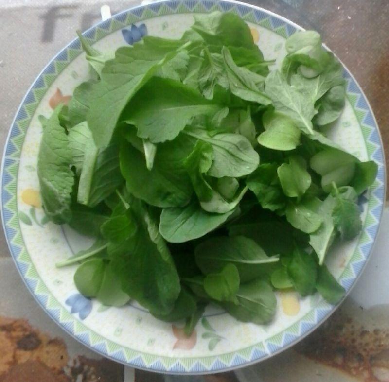 Makaron z pesto z liści rzodkiewek