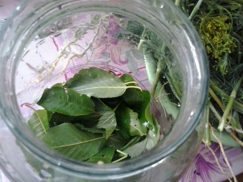 Ogórki kiszone z liśćmi wiśni porzeczki i kolendrą
