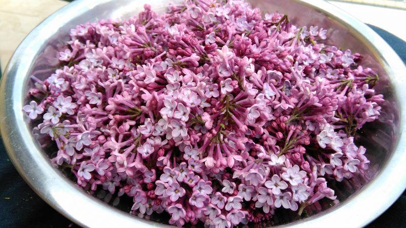 Syrop z bzu liliowego