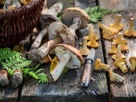 5 mitów na temat grzybów