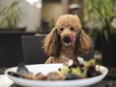 Restauracja wprowadziła menu dla psów!