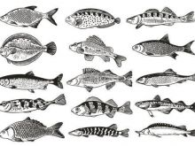 7 przykazań na temat ryb