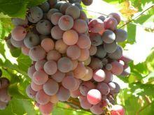 Bezpłatne szkolenie dla przyszłych winiarzy!