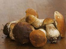 Borowik, podgrzybek i maślak - co wyróżnia te grzyby?