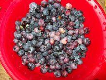 Czarne jagody na wzrok i odchudzanie