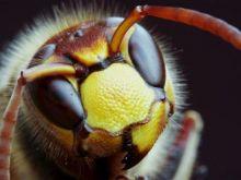 Czy owady ocalą świat przed głodem?