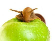 Czym jest Slow Food?