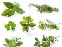 Dzikie zioła w kuchni