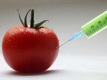 Genom pomidora bez tajemnic!