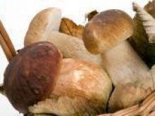 GIS apeluje o ostrożność podczas sezonu grzybowego