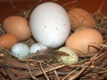 Jajka - informacje na opakowaniu