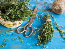 Jak przechowywać zioła?