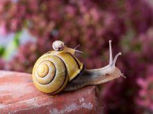 Jak przygotować ślimaki do spożycia?