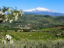 Jak Sycylijczycy walczą z mafią?