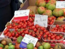 Jak uprawiać pomidory?
