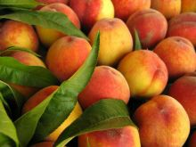 Jakie zastosowanie ma nektarynka?