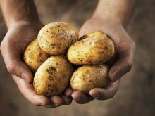 Kulinarne abecadło - ziemniaki
