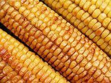 Kolby kukurydziane z grilla