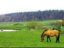 Konkurs na najlepsze Gospodarstwo Ekologiczne 2011