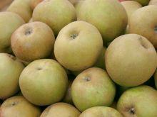 Reneta szara, szara reneta, jabłoń domowa
