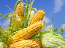 Jedzmy kukurydzę, nie tylko płatki