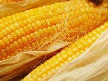 Kukurydza - jak przygotować świeżą?
