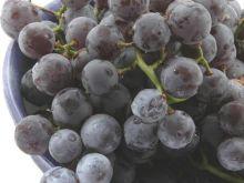 Kuracja winogronowa