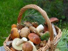 Leśne grzyby we własnym ogródku?
