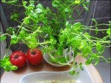 Makaron w ostrym sosie pomidorowym