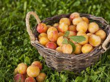 Mirabelki - pyszne na dżemy, nalewki i kompoty