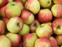 Mrożone jabłka