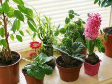 Naturalne zasilanie kwiatów