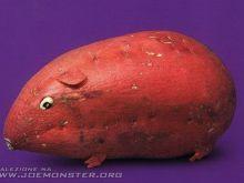 Niesamowite warzywno-owocowe zwierzęta