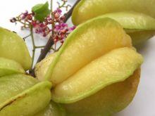 Owoc karambola