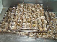 Pieczone ślimaki