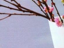 Piskowiec z marcepanem.