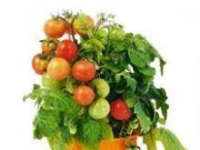 Pomidory - kolory,  charakterystyka