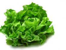 Prawidłowe postępowanie z sałatą zieloną