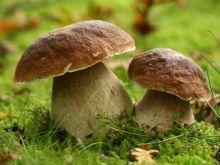 Przechowujemy lesne grzyby