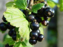 Przetwory z owoców na jesień