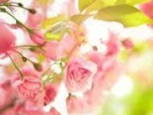 Przetwory z płatków róży